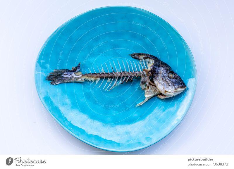 Fish skeleton Dorade Sea bream Skeleton Fishbones Fish head Tail fluke Fisheye Fishery Nutrition Ocean Death Dead animal Food Flake Close-up Animal Fish market