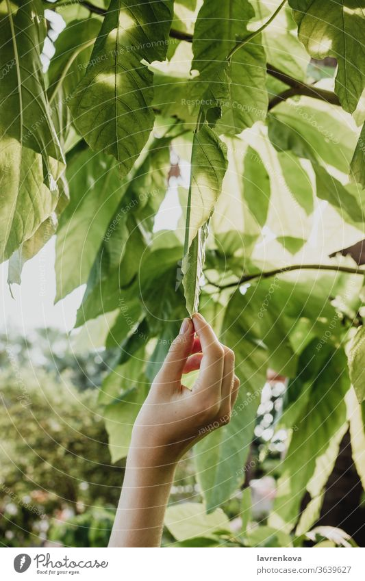 Closseup of female hand toching the leaves on a tree, closeness-to-nature concept growth branch leaf environment fingers fresh garden girl green harvest organic