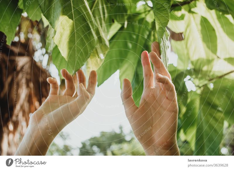 Closseup of female hand toching the leaves on a tree, closeness-to-nature concept environment fingers fresh garden girl green harvest organic plant ripe summer