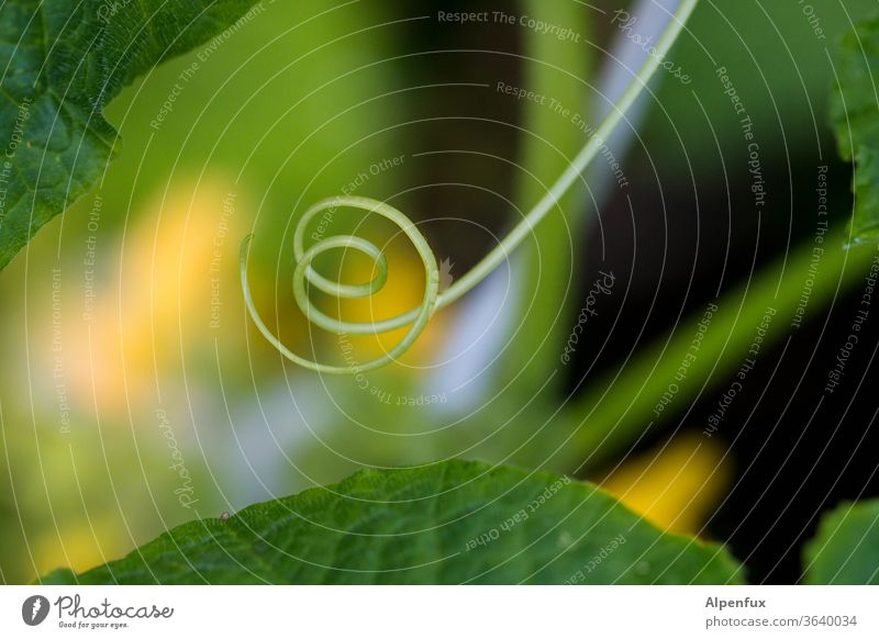 Double loop whorls curling curly curly-tailed Shallow depth of field Structures and shapes Abstract Plant Illuminate Colour Blur Deserted Pattern Colour photo
