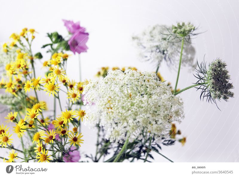 wild flowers Field flowers Yarrow purple Pink White green variegated Summery still life Nature Plant bleed Garden Meadow already Growth Deserted Blossoming