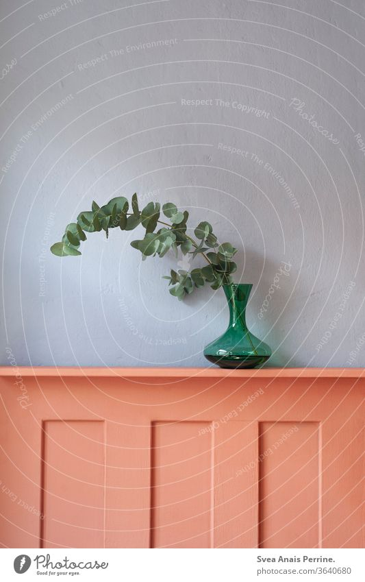 Cold-Warm Blue Red dwell wall paint green Plant eucalyptus Vase Interior shot Decoration
