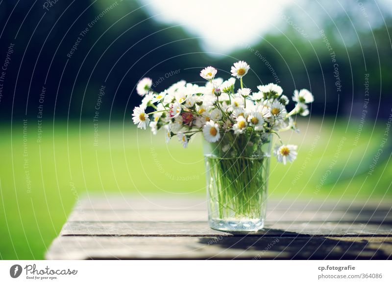 daisies Garden Table Plant Sun Summer Flower Blossom Warmth Glass Daisy Wooden table Colour photo Exterior shot Deserted Copy Space left Day