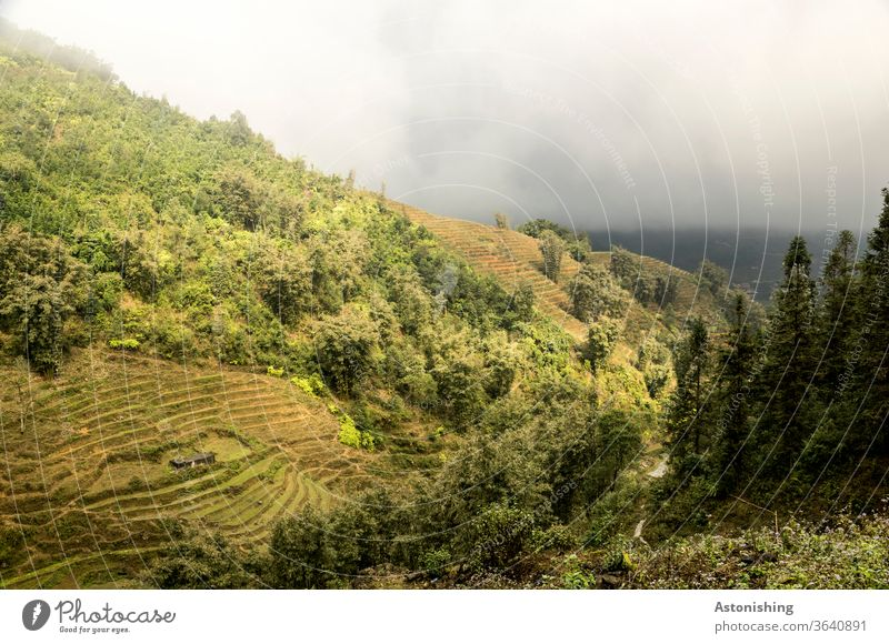Landscape in the mist of SaPa, Vietnam Weather Exotic stagger Exterior shot sa pa sapa Asia Nature Vacation & Travel plants Vantage point Agriculture
