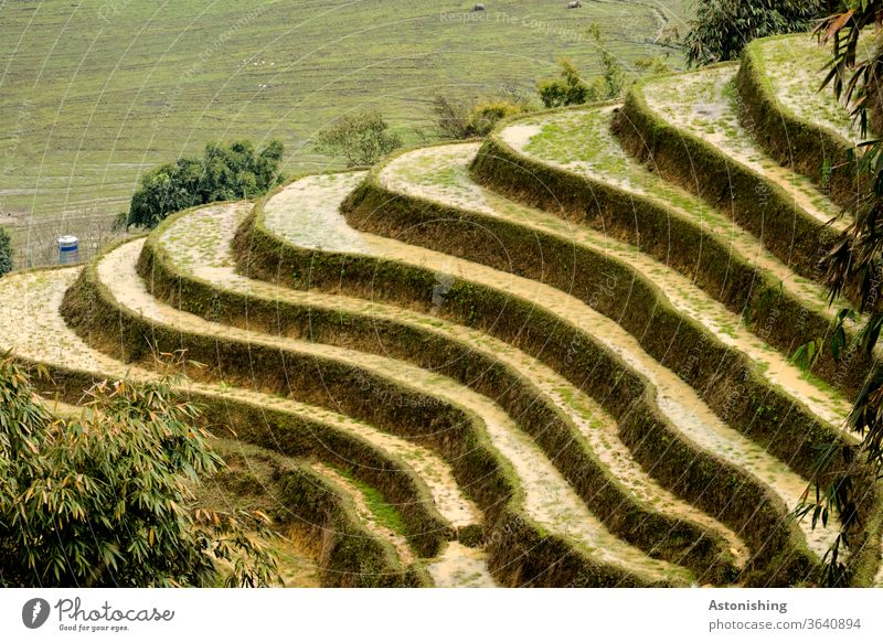 Rice terraces in Sapa, Vietnam Rice Terraces rice terrace sapa terraced Agriculture green Nature Landscape Field Paddy field Colour photo Asia Exterior shot