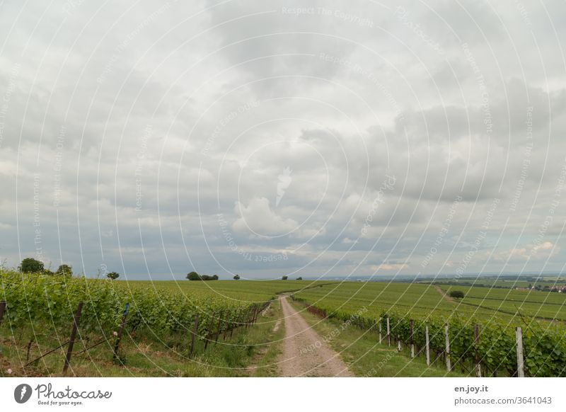Path between vines to the horizon in cloudy weather Vine off Horizon Sky Clouds Summer Wide angle green Wine growing wide Agriculture ecologic Idyll Vineyard
