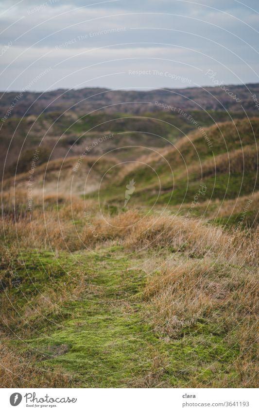 dune landscape dunes vacation Landscape curt Nature Vacation & Travel Coast Marram grass North Sea Island North Sea coast home leave baltrum