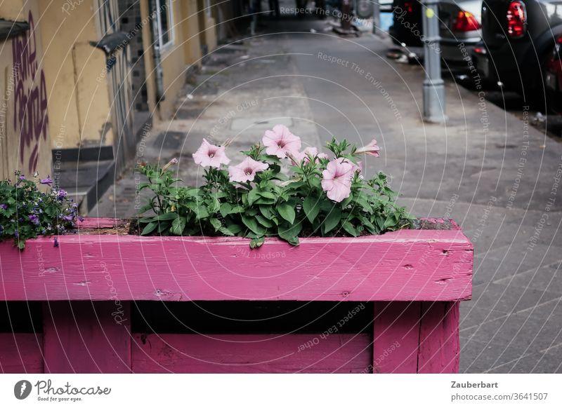 Pink flower in pink flower box from Holzkirchen on a street in Neukölln flowers Window box flower tub Street off Lanes & trails Sidewalk Town beautification