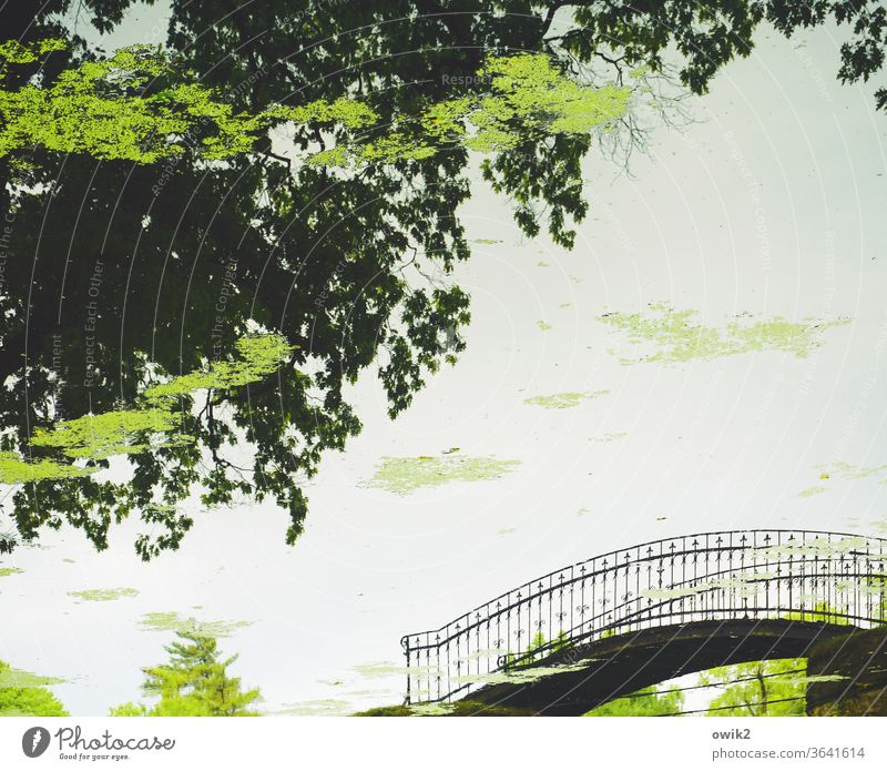 convergence Detail reflection Arched bridge Curved Metal pile-lander Elegant Park Pond Reflection Mirror image On the head Rotated 180° Water Surface of water