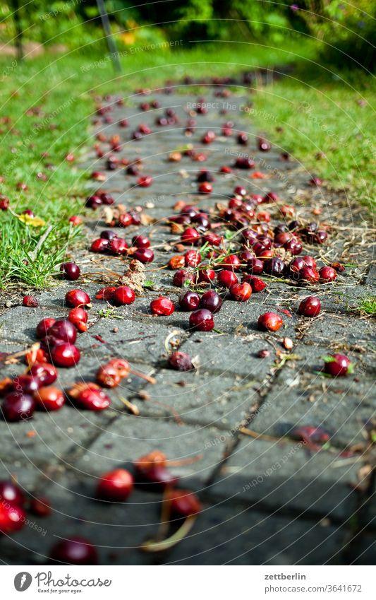 Falling fruit: Cherries Branch tree Harvest holidays Garden Grass cherries allotment Garden allotments Deserted Nature Plant Lawn tranquillity Garden plot