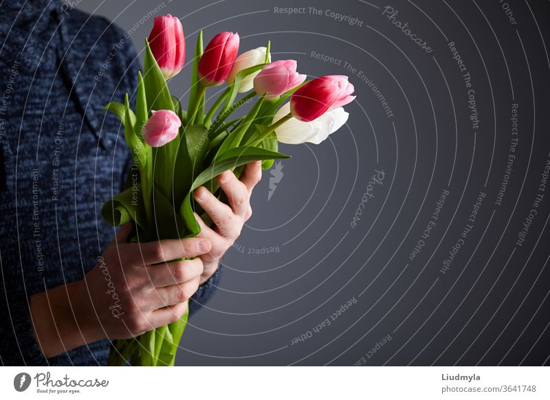 Male holding bunch of tulips. Colorful tulips in man's hands. Studio light. Soft focus. Spring flowers, pink, white and tulips in hands. Easter, Birthday, Mother's, Women's, Wedding Day concept.