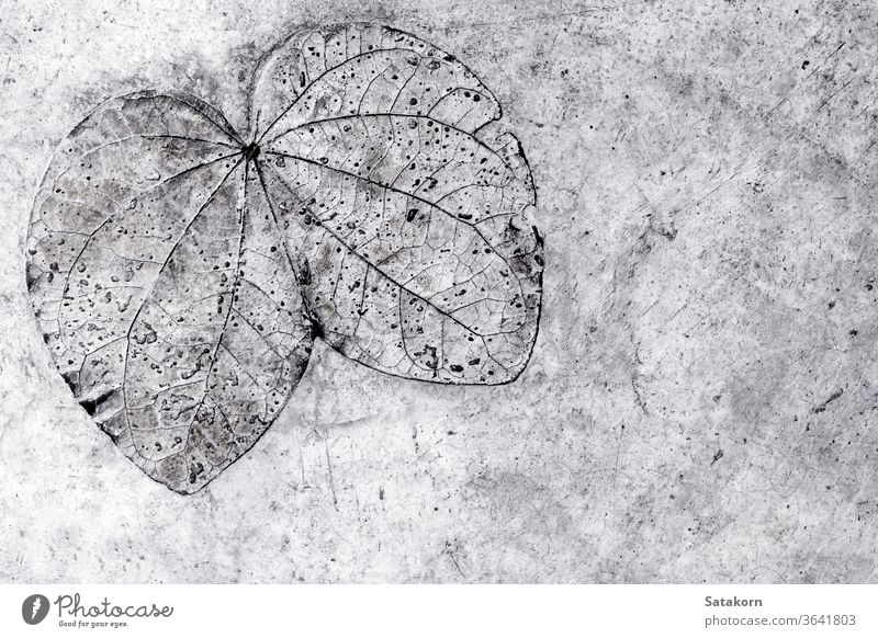 Leaf texture in concrete floor leaf pattern nature gray grey background old natural surface imprint abstract backdrop architecture detail rough beautiful design