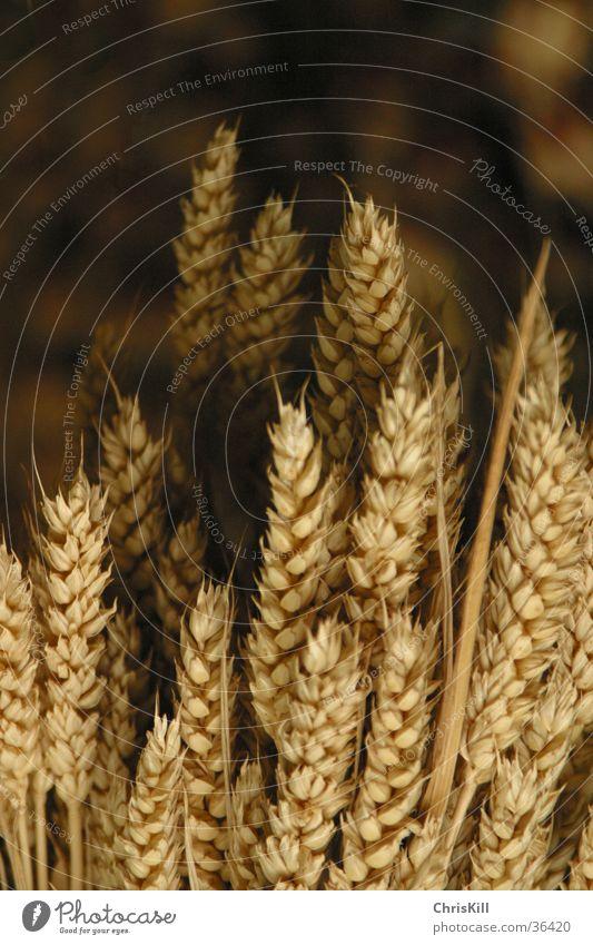 Dark Field Grain Agriculture Americas Grain