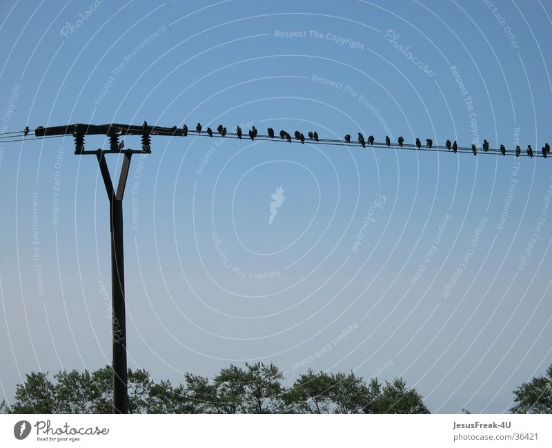 favourite place Bird Electricity pylon Afternoon Multiple beeches Blue sky Many