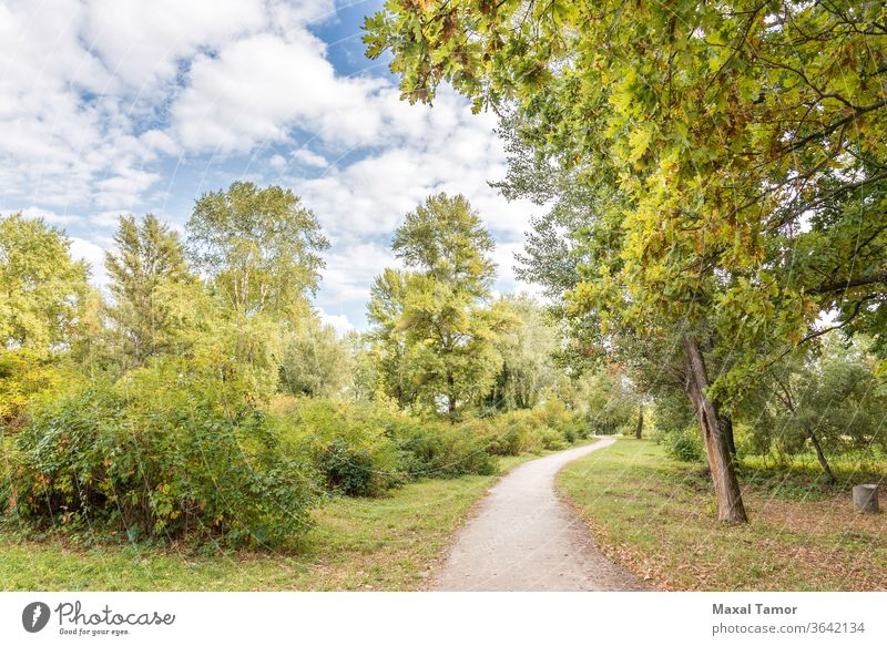 A walk in the Park autumn background bush cloud country environment fall foliage footpath forest green landscape lane leaf light maple natural nature oak