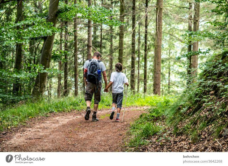 conform | in step Hold hands Forest Vacation & Travel Love Family & Relations Parents Child Man Boy (child) Hiking Father Son Summer Nature Exterior shot