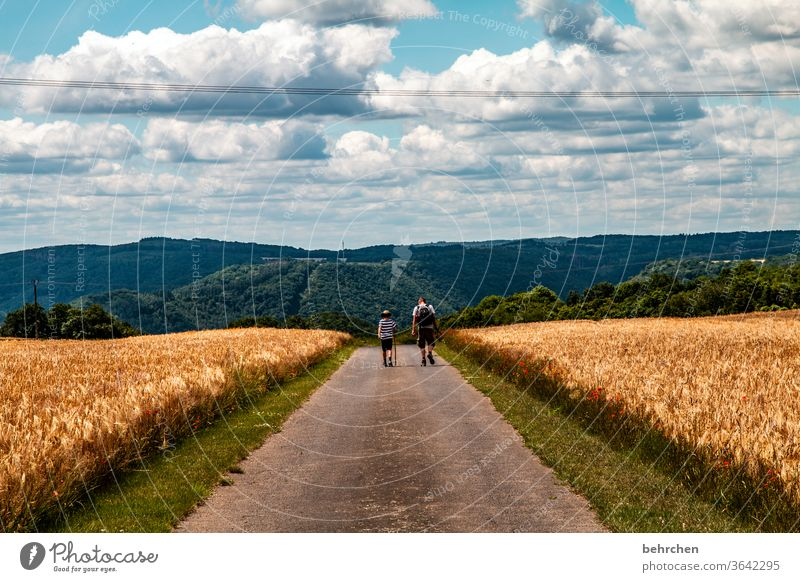 Hiking is the miller's desire Landscape Agriculture grain Grain Wheat Barley Rye Father Son Sky Clouds Summer Field Nature Cornfield Ear of corn Exterior shot
