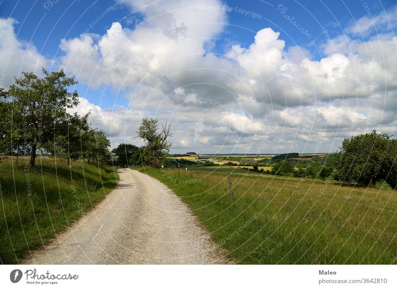 Summer landscape with fields, meadows and field road nature grass summer rural sky green sun tree dirt horizon weather spring blue cloud cloudscape non-urban