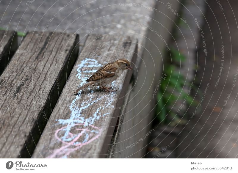 A gray sparrow sits on a park bench nature background white sitting woman old animals birds hand summer eating outdoor wooden feed graphic adult breadcrumbs