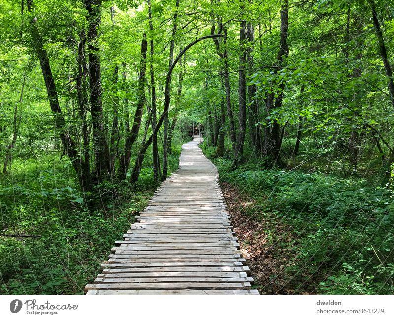 forest path - forest footbridge Wooden bridge Exterior shot Colour photo Deserted wood Day Nature Pole Shadow Landscape Environment Lanes & trails