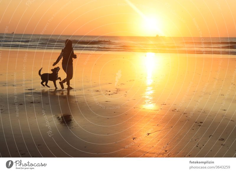 Woman with dog on the beach at sunset Sunset on the beach sunset mood Beach Reflection Ocean Sunset light Sunset sea woman with dog Man with dog man with animal