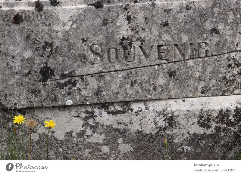 engraved writing Souvenir in grey weathered stone block, with two small yellow flowers Grave Tombstone Epitaph Inscription Weathered Cemetery Death weaker