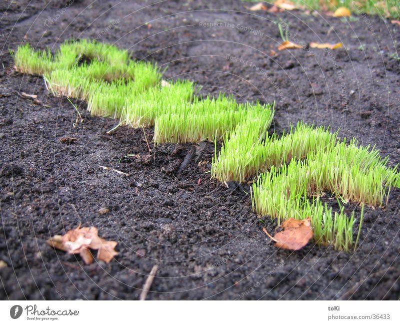 Green Sun Grass Garden Park Letters (alphabet) Lawn