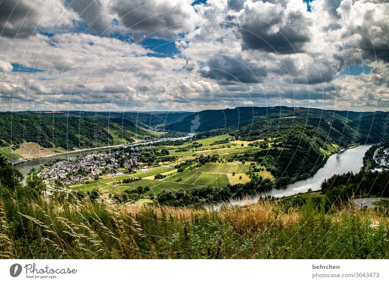 life is much too short to drink bad wine! Moselle loop Town Germany Hunsrück Moselle valley Wine growing tranquillity Sunlight Mosel (wine-growing area)