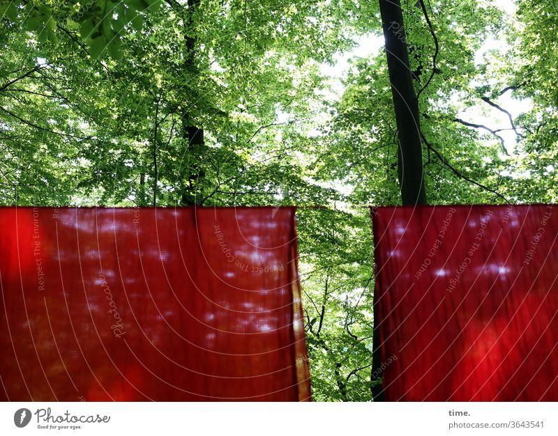 The goal is in the way Forest green Red Rag cloths hang Art Action art event spring leaves Deserted two spooky Puzzle Mysterious Border visual impairment lock