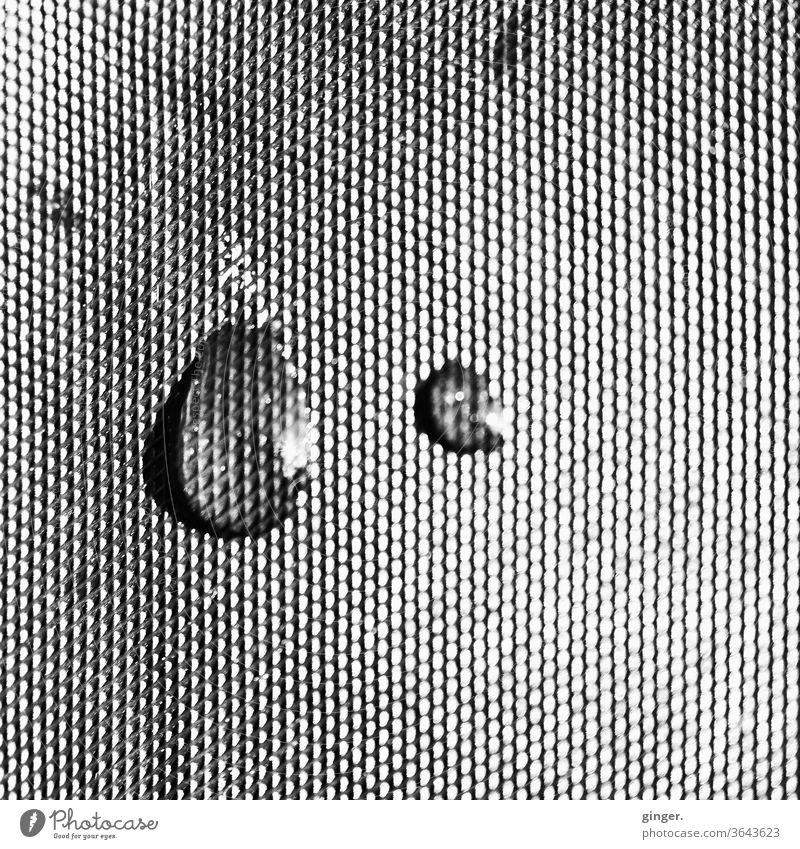 Drops on foil b/w - Just a little bit sad Black & white photo Things Packing film Structures and shapes Water Rain Macro (Extreme close-up) Exterior shot