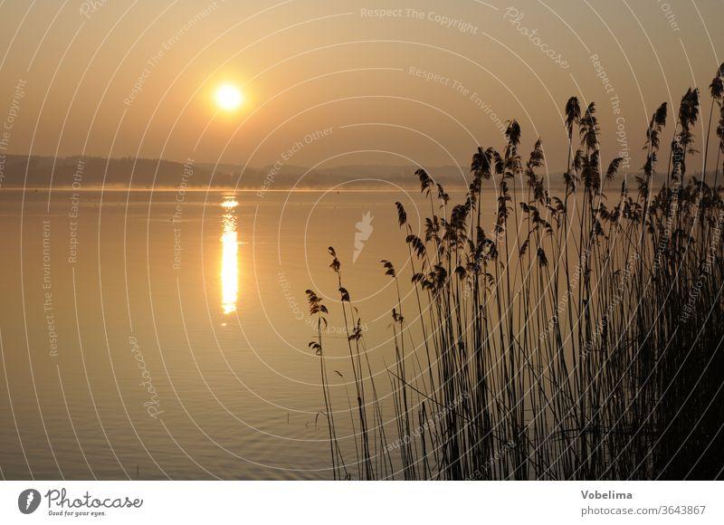 Morning at Lake Constance Reichenau Baden-Wuerttemberg Sunrise morning sky bank Coast reed Grass grasses reed grass Reeds morning sun romantic Idyll idyllically