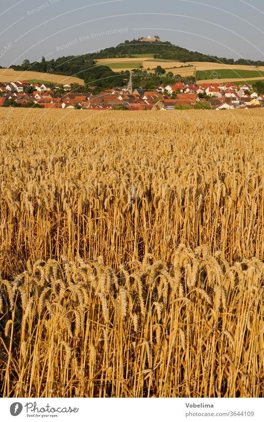 Grain field at Otzberg Field Wheat Wheatfield otzberg Odenwald Hesse Germany Agriculture Landscape cereal cultivation hesse germany Europe