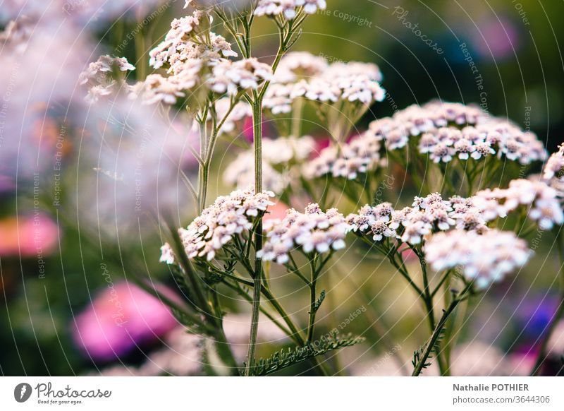 Wild flowers in meadow Flower Meadow flower Garden Plant Nature Summer Blossoming spring Colour photo Exterior shot Flower meadow Close-up White Spring