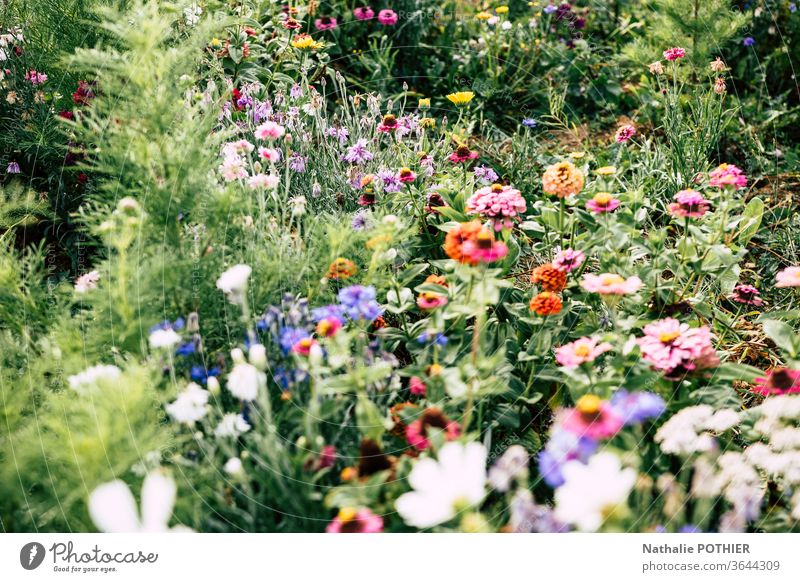 Multitude of flowers in the garden Blossoming Flower meadow Nature Garden Summer spring Exterior shot Colour photo blossom color Spring Meadow multitude Park