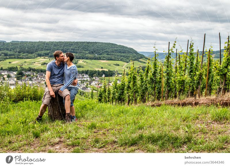 12!!! years Hunsrück Moselle valley Wine growing Rhineland-Palatinate River bank Mosel (wine-growing area) Sunlight tranquillity Idyll vine Vine Bunch of grapes