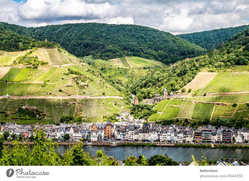 city country river Hunsrück Moselle valley Sunlight Mosel (wine-growing area) River bank Rhineland-Palatinate Wine growing tranquillity Idyll vine Vine