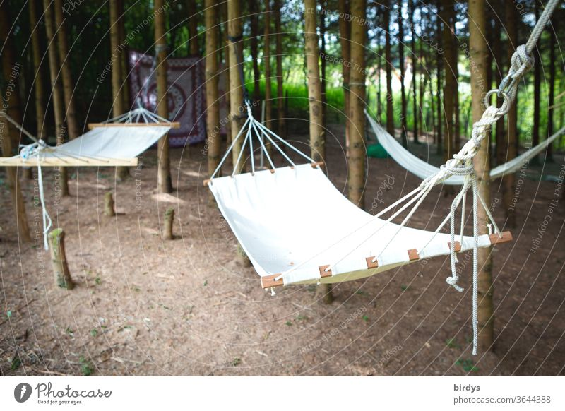 Hammocks on trees in a small grove huts chilly Many Relaxation Nature Summer relaxation Shallow depth of field Rest tranquillity Day daylight Forest vacation