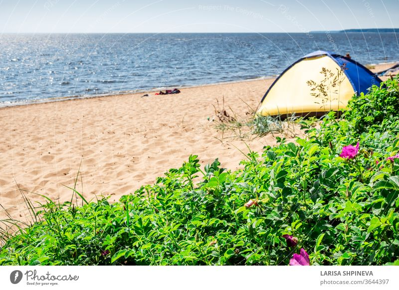Camping and tent on beach sea under the pine forest on shore of Gulf of Finland, St. Petersburg, Russia. Concept of outdoor activities, healthy lifestyle