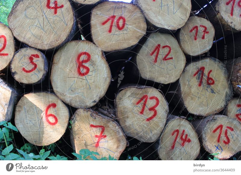 Numbers on stacked tree trunks. Numbered logs. figures Red numbered wood Forestry Lumber industry Sequence of numbers crosscut Red Numbers Digits and numbers