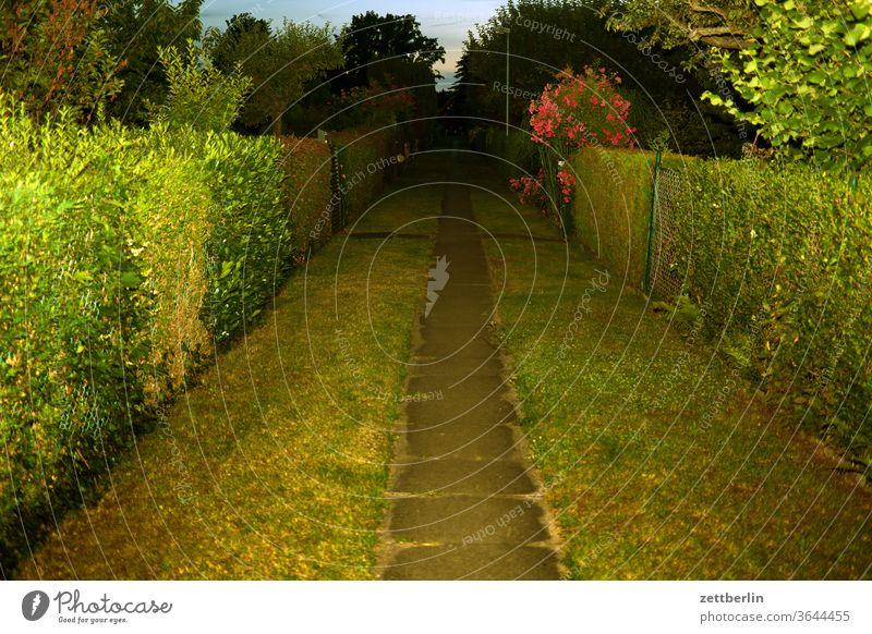 Path through the allotment garden colony in the evening Evening Branch tree lightning bolt flash conceit Relaxation holidays Garden Grass Sky Garden allotments
