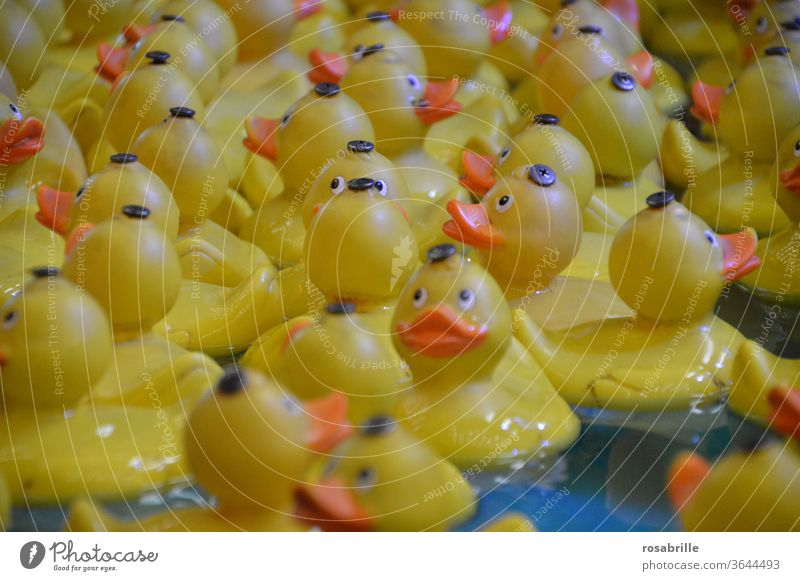 squeaking ducks | caught in plastic squeaky duck Duck Squeak Bathtub Squeak duck bathe Plastic duck Yellow Toys Playing Playful game Fishing (Angle) price