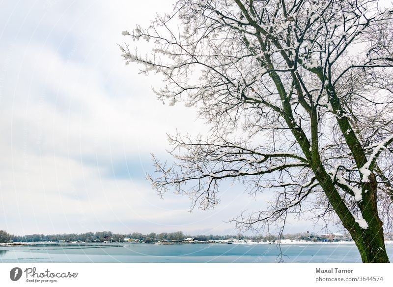 A poplar close to the Dnieper river in Kiev, Ukraine, during winter Ducks blue bright calm clouds cold cool day environment frost frozen ice lake landscape