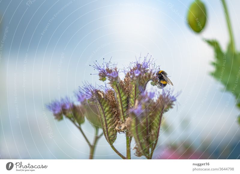 Bumblebee on blossom Bumble bee bleed flowers Insect Animal Summer Nature Exterior shot Colour photo Plant Day Close-up Deserted Grand piano