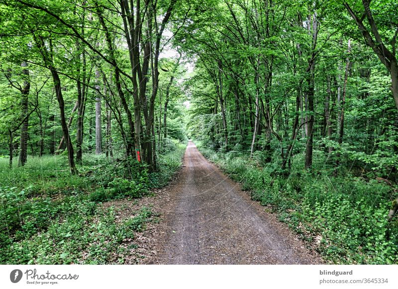 There's order in the German woods, the paths are straight as a die... A forest path - but soon the forest is gone Direct Nature Forest Gravel Colour photo Green