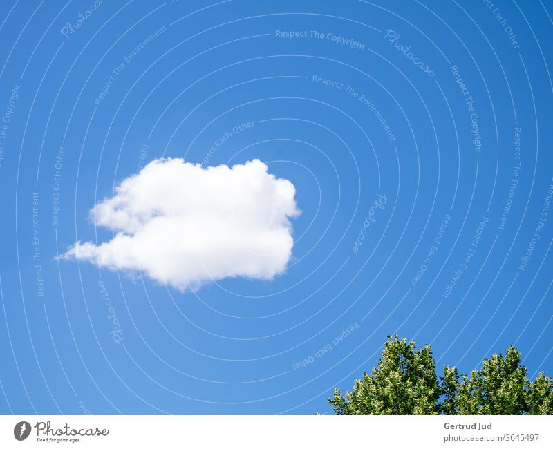 A white cloud in the blue summer sky Sky minimalism Blue Clouds Nature Beautiful weather Summer Day Exterior shot Deserted Colour photo Environment White