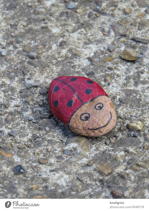 Ladybird lucky stone on a wall Lucky Stones Beetle DIY Animal Insect Macro (Extreme close-up) Close-up Red Point Exterior shot Good luck charm Small Black 1 Day