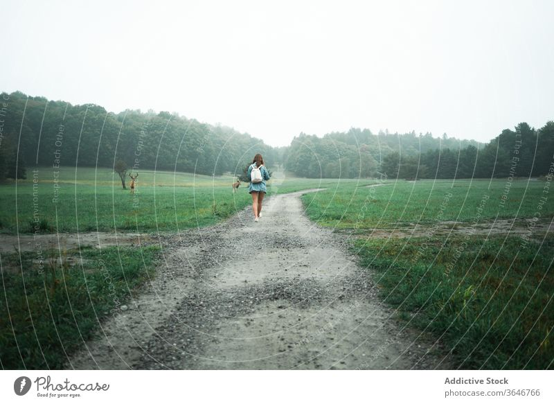 Traveling woman walking along road in meadow field deer pasture travel tourist nature wild admire landscape female green trip sand wet fog adventure holiday