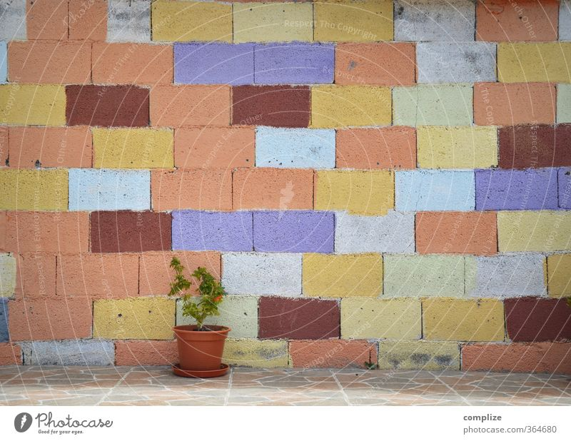 Plant Wall (building) Dye Wall (barrier) Stone Facade Living or residing Crazy Bushes Construction site Friendliness Hip & trendy Craft (trade) Trade Bizarre