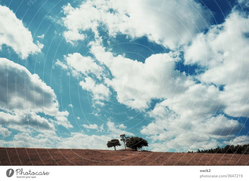 Tree Group Grove of trees Horizon Sky Clouds Lonely acre Field Wakdrand Agriculture Nature Landscape Blue Summer Exterior shot Colour photo Growth Deserted