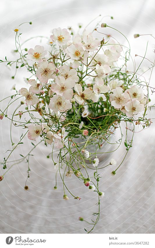 Vortex Flowers Bouquet flowers Flower vase bleed Flowering plant blossom Blossoming blooms Plant spring already Summer Pink Decoration White green Table